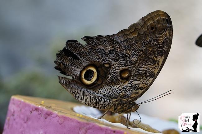 butterflygar10