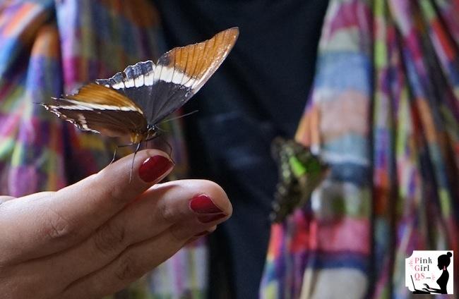butterflygar12