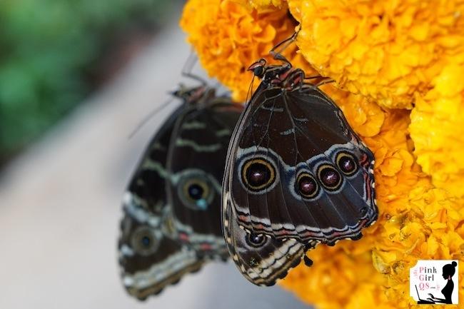 butterflygar15