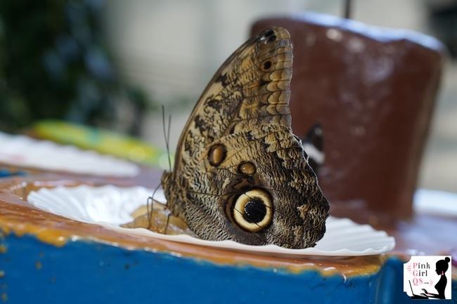 butterflygar16