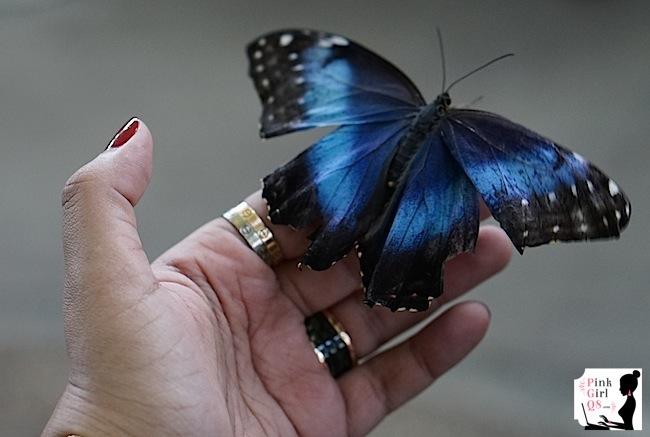 butterflygar17